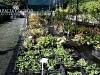 f005_centrum_ogrodnicze_azalia_i_ogrod