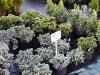 f008_centrum_ogrodnicze_azalia_i_ogrod