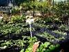 f011_centrum_ogrodnicze_azalia_i_ogrod