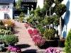 f013_centrum_ogrodnicze_azalia_i_ogrod